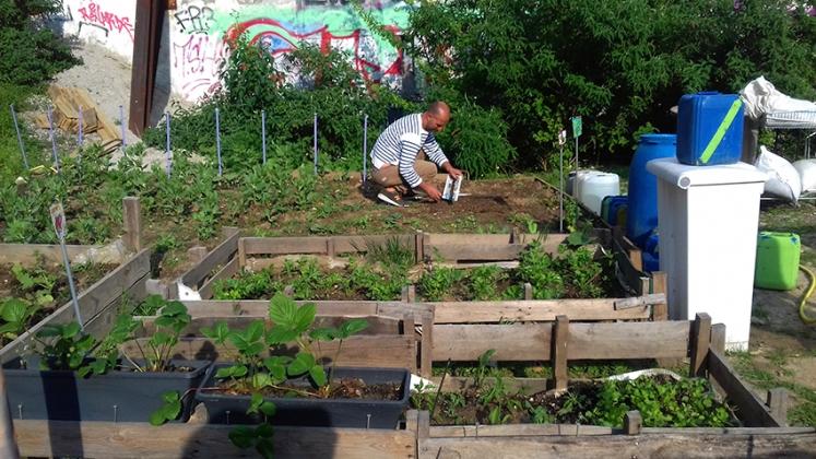 Goutte d\'Or : les jardiniers de « la friche Polonceau ...